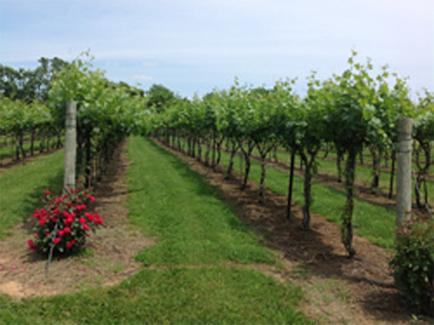 Village-Winery